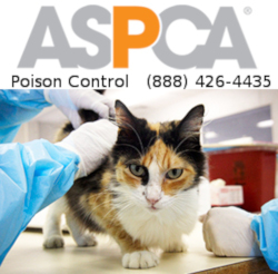 We are your best resource for any animal poison-related emergency, 24 hours a day, 365 days a year. If you think that your pet may have ingested a potentially poisonous substance, call (888) 426-4435. A $65 consultation fee may be applied to your credit card.