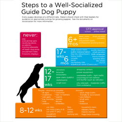 socialization guide thumb